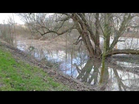 Spaziergang Linden Nord bei Hochwasser
