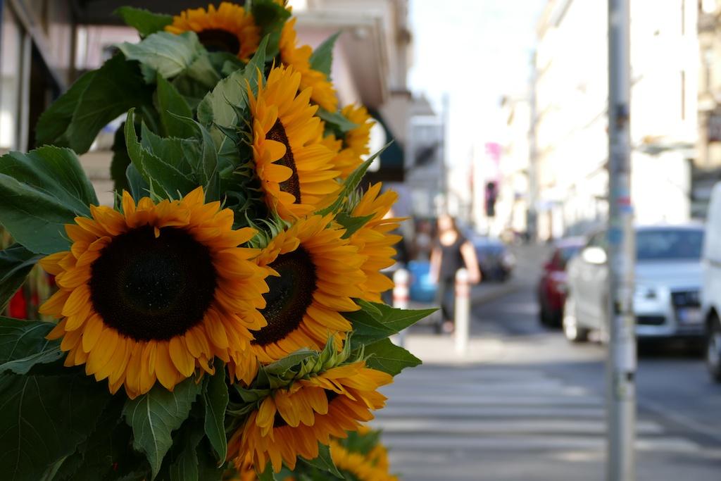 wien mit sonnenblumen verschönert