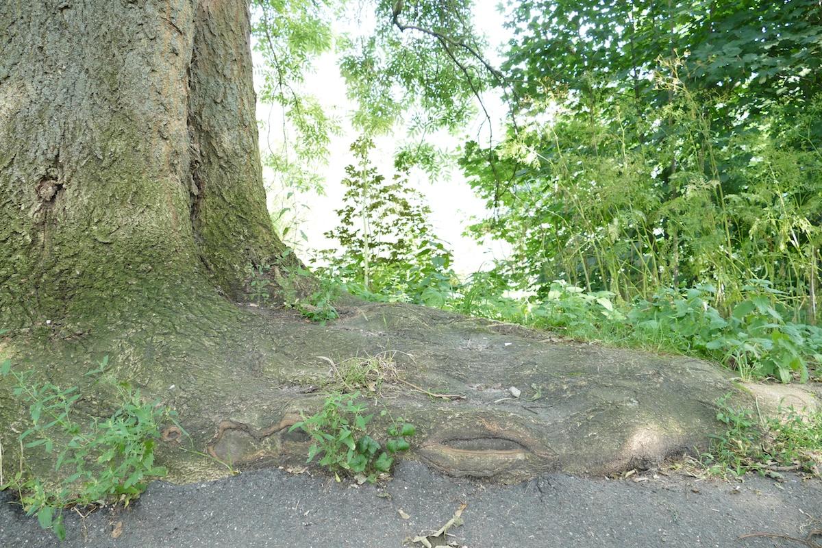 Baum an der Ihme in Hannover