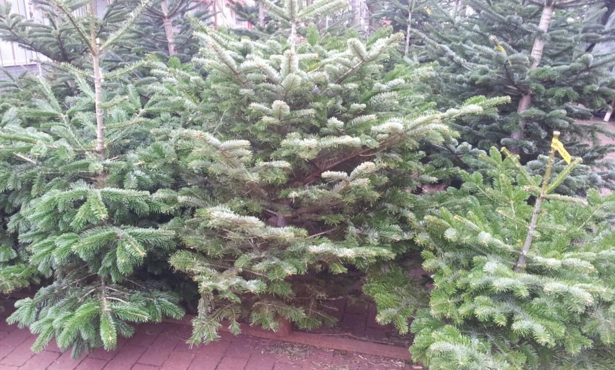weihnachtsbäume im verkauf